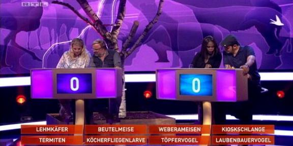Cliparts.TV_Spieletechnik_Martin_Rütter_Die_grosse_Tiershow_2013_Copyright_RTL_288_003