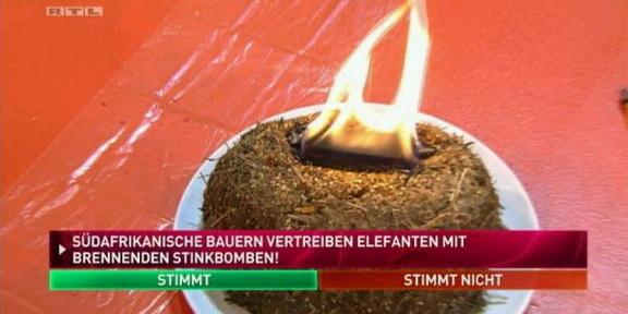 Cliparts.TV_Spieletechnik_Martin_Rütter_Die_grosse_Tiershow_2013_Copyright_RTL_288_005